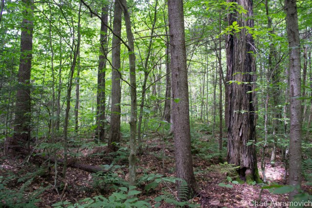 The deep woods of New Boston